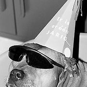 Baldo met hoed en zonnebril hond van Birgit en Klaas Weesp voor dierendag foto hond