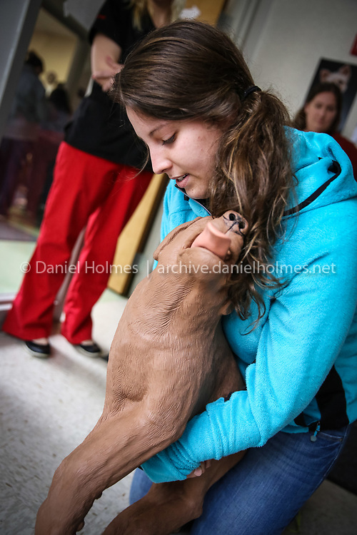 """(4/27/14, FRANKLIN, MA) Chelsey Smith of Franklin performs the Heimlich maneuver on """"CasPeR The CPR Dog"""" during the pet CPR and first aid course at  Destination Dog in Franklin on Sunday. The course was led by instructor Amy D'Andrea of Pet Emergency Education, LLC and students were certified in pet CPR and first aid after completing the 3-hour course. Daily News and Wicked Local Photo/Dan Holmes"""