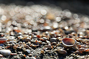 front, selective focus of Seashells on the sea shore