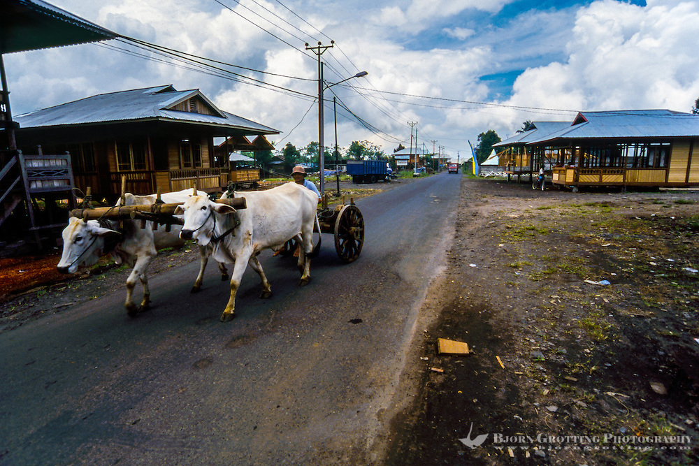 Indonesia, Sulawesi, Woloan. An ox cart transporting goods in Woloan village.