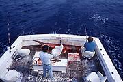 sport fishermen with captured scalloped hammerhead shark, Sphyrna lewini, during shark fishing tournament, Miami, Florida, USA ( Western Atlantic Ocean )