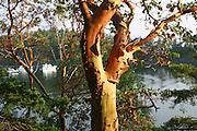 Madrona Tree, Echo Bay, Sucia Island, San Juan Islands, Washington<br />