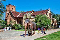 Sri Lanka, province du centre, Kandy, ville classée patrimoine mondial de l'UNESCO, Saint Paul Church, église près du temple de la dent, éléphant // Sri Lanka, Ceylon, North Central Province, Kandy, UNESCO World Heritage city, elephant in front of Saint Paul Church