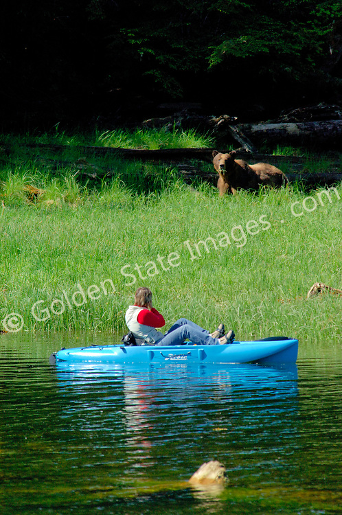 A kayaker photographs a brown or grizzly bear<br /> <br /> Brown Bears and Grizzly Bears are the same species. In general Bears living within 50 miles of the coast are considered browns. Animals living further inland are considered Grizzlies.  <br /> <br /> Grizzlies are omnivores feeding on a variety of plants berries roots and grasses in addition to fish insects and small mammals. Salmon are a key part of their diet. Normally a solitary animal they will congregate along streams and rivers during Salmon runs. Weight to over 1200 pounds.    <br />  <br /> Range: Native to Asia Africa Europe and North America. Now extinct in much of their original range.    <br />   <br /> Species: Ursus arctos