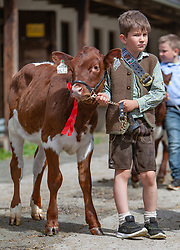 29.04.2018, Maishofen, AUT, XII Weltkongress Pinzgauer Rind, im Bild Jungzüchter mit seinem Kalb (Bambini) // Young breeder with his calf (Bambini) during the XII Pinzgauer cattle World Congress in Maishofen, Austria on 2018/04/29. EXPA Pictures © 2018, PhotoCredit: EXPA/ Stefanie Oberhauser