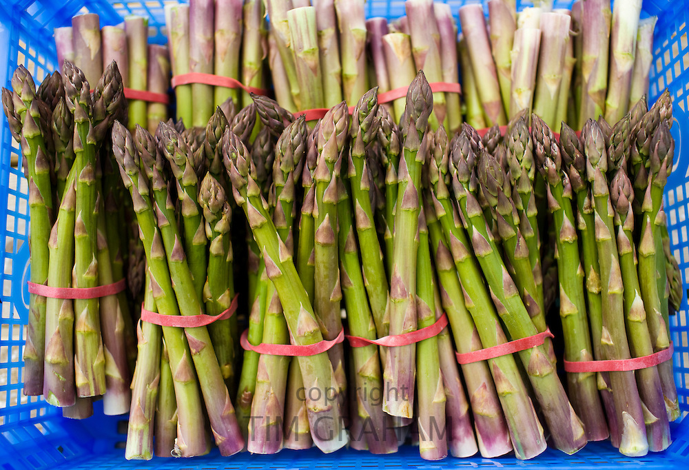 Bunches of freshly picked asparagus at Revills Farm in the Vale of Evesham, Worcestershire, UK