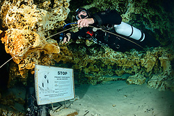 Taucher, Hoehlentaucher bei STOP Schid am Eingang zur Hoehle von Ginnie Springs , Scuba Cave diver by STOP sign near entrance of the cave from Ginnie Spring, High Springs, Gilchrist County, Florida, USA, United States, Februar 2014