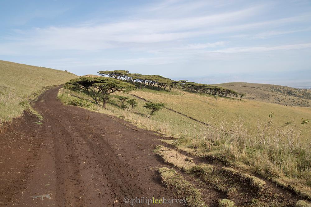 Landscape with view of a dirt road on hillside in Ngorongoro Highlands, Tanzania