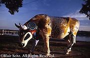 Harrisburg, PA, Cattle Theme Art, Riverfront Park, City Center