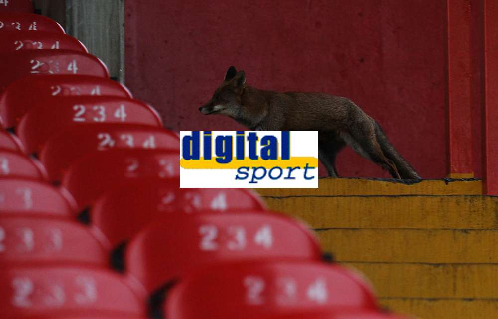 Photo: Javier Garcia/Back Page Images Mobile +447887 794393<br />Crystal Palace v Charlton Athletic, FA Barclays Premiership, Selhurst Park, 05/12/04<br />A fox arrives early at Selhurst Park to get the best seat