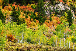 Aspens and mountain maples decorate the hills of Swan Valley Idaho on an autumn day.