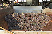 grapes in the receiving hopper quinta de sao jorge alentejo portugal
