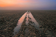 The tracks left by a tractor in a corn field, fading in the thick mist. Taken about 30 minutes before sunrise on a cold and foggy morning at the beginning of November in the fields around Vigone in Piedmont, italy.