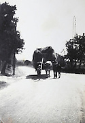 ox pulling a cart with hay countryside France