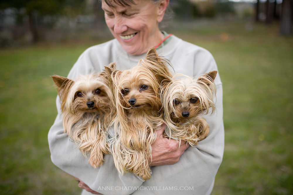 Three Yorkshire terriers and their owner at Camp Winnaribbun, a dog camp, at Lake Tahoe.
