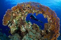 26/Noviembre/2015 Egipto. Sharm el-Sheij.<br /> Una modelo posa en un arrecife de coral en el Mar Rojo.<br /> Modelo: Susana Morillas.<br /> <br /> © JOAN COSTA