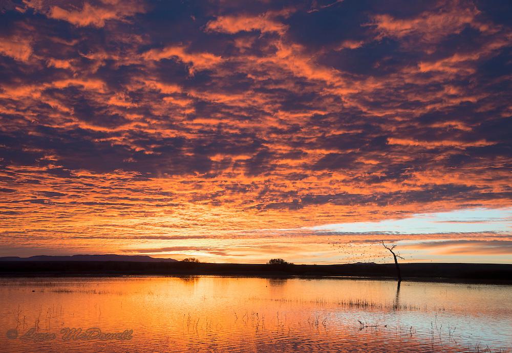 The magic of sunrise and clouds.  Bosque del Apache NWR, New Mexico