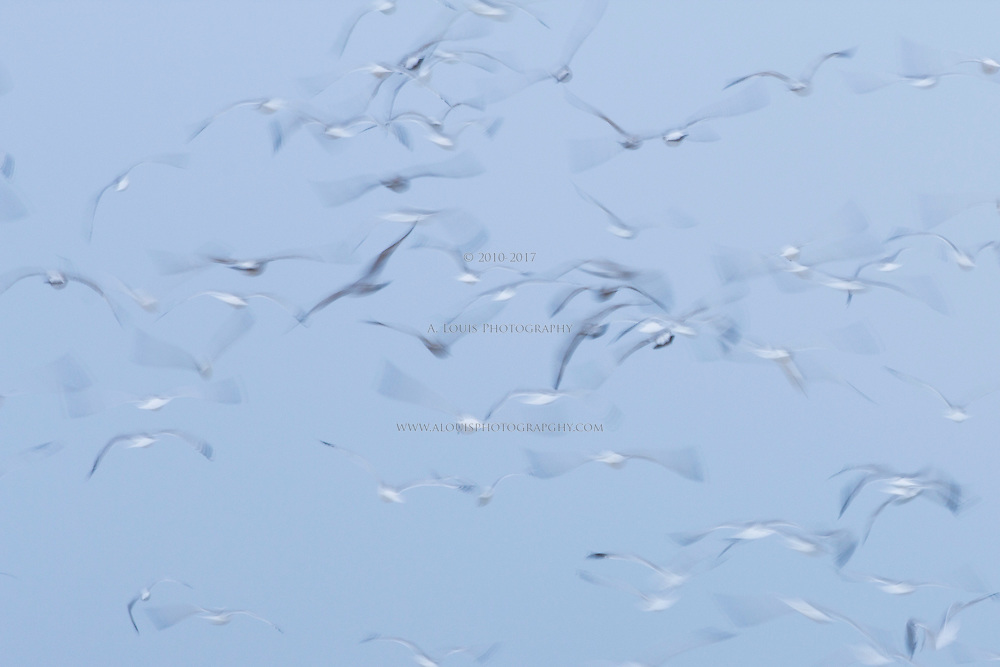 An abstract images of seagulls in flight
