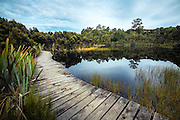 A boardwalk runs along Lake Wilkie and into the Catlins forest, South Island, New Zealand.