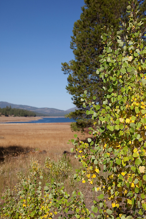 Aspen and Pine trees in Sagehen Meadows. Stampede Reservoir, CA can be sen in the distance.