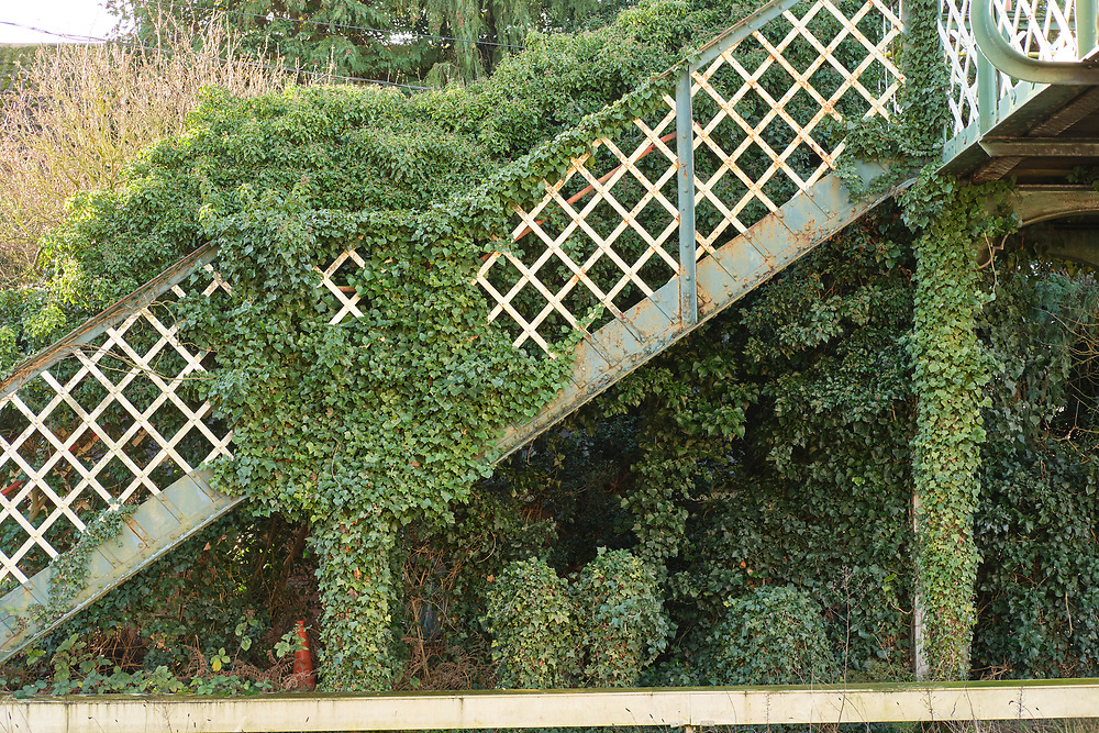 The second platform at Trimley Station is now disused, the runs from the steps removed & access blocked from the foot bridge. Plant life has been allowed to takeover to structure.<br /> <br /> Photo by Jonathan J Fussell, COPYRIGHT 2020