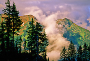 Evergreen and mountains on cold, foggy morning - Mt. Baker N.F., Washington