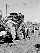 5584Hop picking machine, close up at the E. Clemens Horst hop ranch near Independence, Oregon. September 1, 1942.