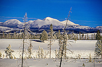 Yellowstone National Park in winter, Wyoming USA