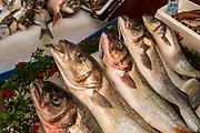 Saint-Tropez, France. Port. Fresh catch of the day