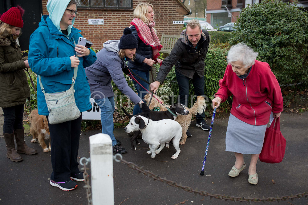 An elderly lady takes care around a group of dogs and their owners outside St. Barnabas community hall in Dulwich Village in the south London borough of Southwark, serving as a polling station for the UK's General Election 2 weeks before Christmas, on 12th December 2019, in London, England.