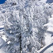 A late winter storm blows into Mammoth Lakes, CA in mid March dropping a few feet of snow on the mountain and creating a epic day of light powder for skiers and boarders.