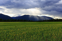 Farmland on a cloudy stormy afternoon in Northern Idaho<br /> <br /> ©2016, Sean Phillips<br /> http://www.RiverwoodPhotography.com