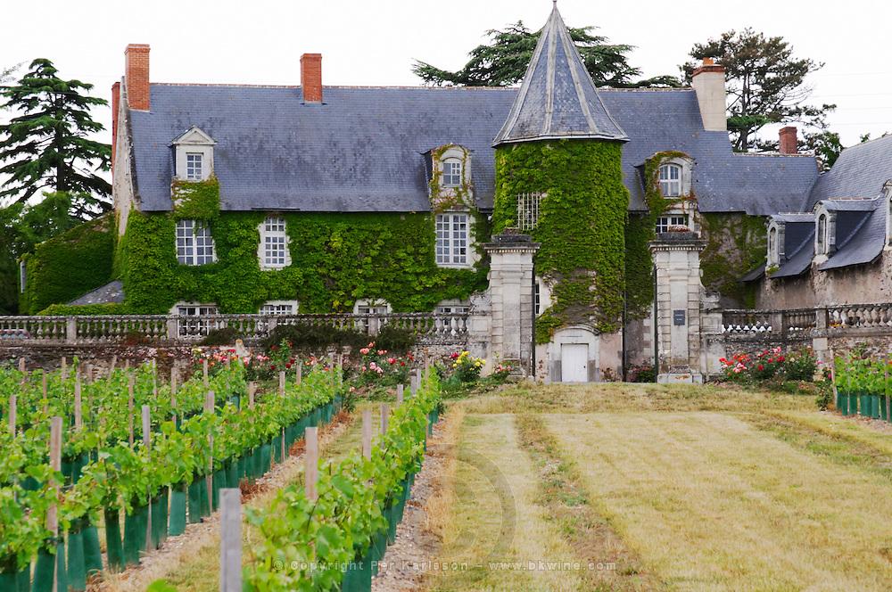 Vineyard. Chateau de Chamboureau. Savennieres, Anjou, Loire, France