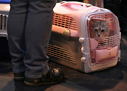 © Licensed to London News Pictures. 19/11/2011, Birmingham, UK.  A cat waits in a pink catbox to be judged. The Supreme Cat Show held today, 19 November in the National Exhibition Centre, Birmingham.  The event is a highlight in the cat show calendar and is regarded as the feline equivalent of Crufts. Photo credit : Stephen Simpson/LNP