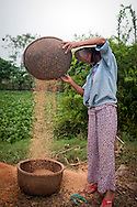 A vietnamese farmer separates rice from the seeds. Hue's countryside, Vietnam, Southeast Asia