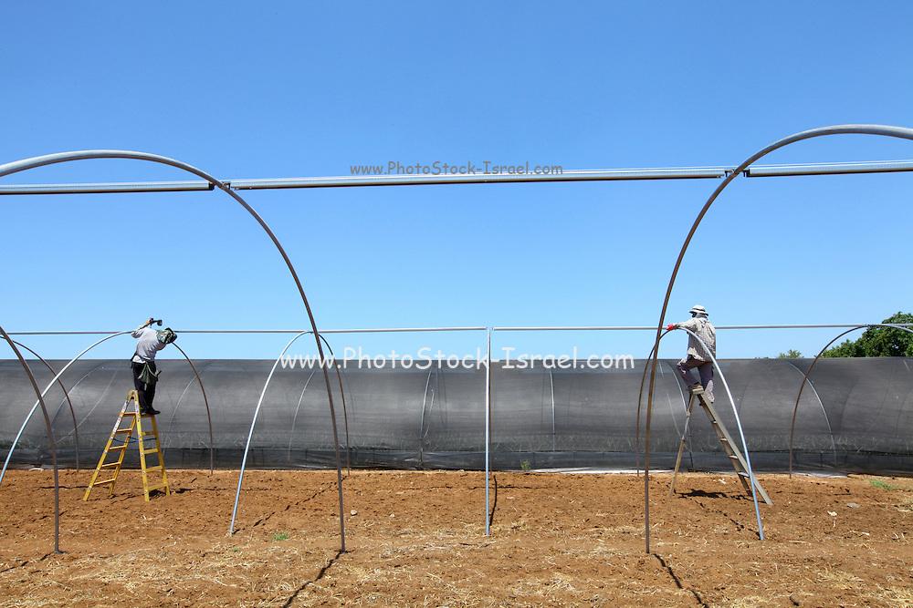 Migrant workers build a greenhouse in Israel, Emek Hefer