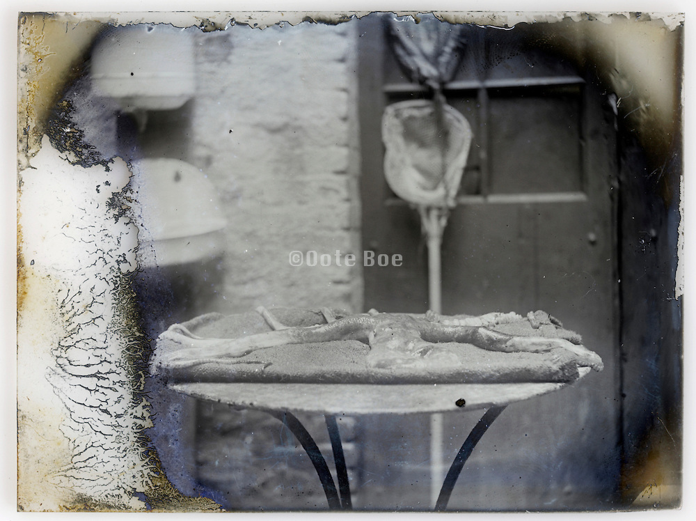 deteriorating glass plate with still life of octopus on a table