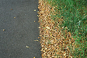 Nederland, Malden, 15-8-2020  Door de aanhoudende en langdurige droogte verliezen bomen al vroeg blad . Foto: ANP/ Hollandse Hoogte/ Flip Franssen
