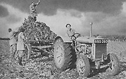 Women's Land Army lifting a crop, 1940. Among the many skills these young women, often city girls, was tractor driving. World War II .