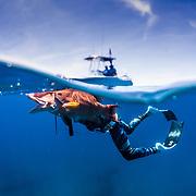 Summer 19 Diving