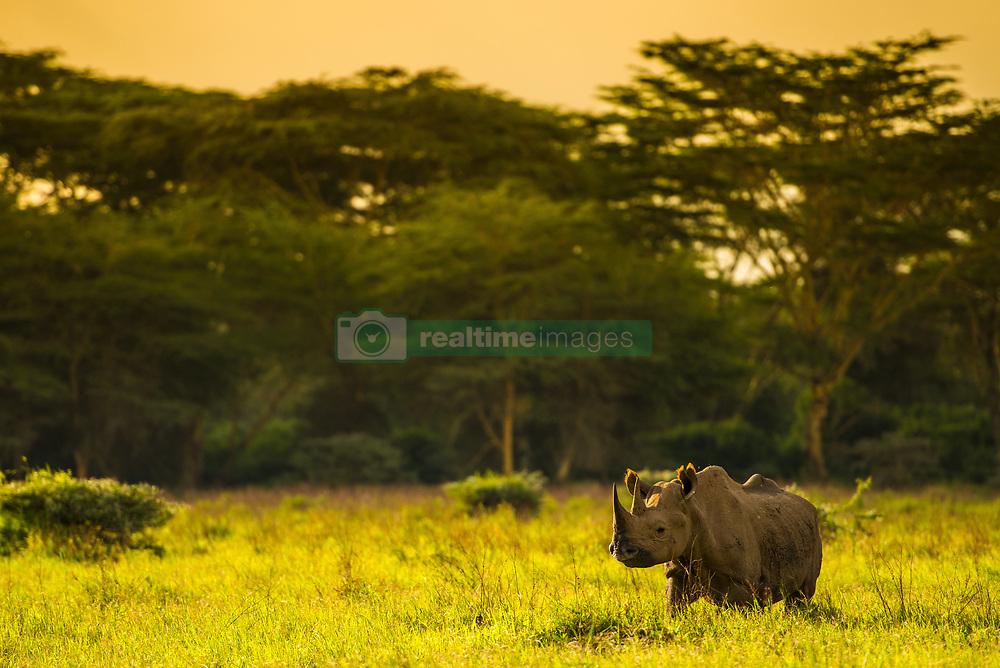 , Kenya - 5/9/2016 - (Photo by Shannon Wild/VWPics) *** Please Use Credit from Credit Field *** *** Please Use Credit from Credit Field ***