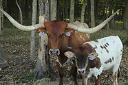 2021 - JFS - Down On The Farm