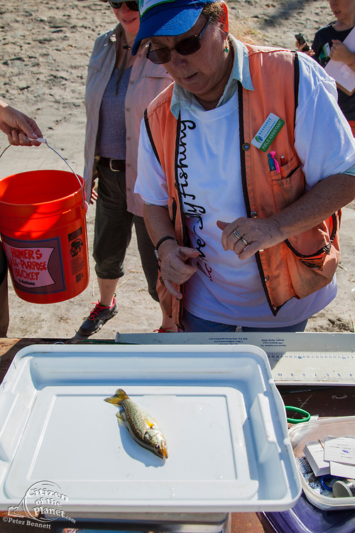 Experienced anglers, kids and those wishing to learn to fish attend The first annual Off tha' Hook fly fishing event held on September 6, 2014 on the banks of the Los Angeles River. Elysian Valley, Los Angeles, California, USA