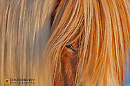 Icelandic horses in south Iceland