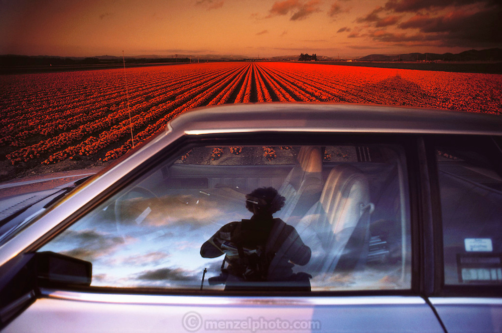 Self-portrait of photographer Peter Menzel in his rental car window; fields of marigolds in the background in Lompoc, California.