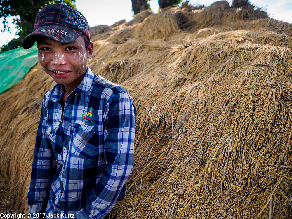 "21 NOVEMBER 2017 - MAUBIN, AYEYARWADY REGION, MYANMAR: A worker on a rice farm in the Ayeyarwady  Delta. Myanmar is the world's sixth largest rice producer and more than half of Myanmar's arable land is used for rice cultivation. The Ayeyarwady Delta is the most important rice growing region and is sometimes called ""Myanmar's Granary."" The UN Food and Agriculture Organization (FAO) is predicting that the 2017 harvest will increase over 2016 and that exports will surge to 1.8 million tonnes.   PHOTO BY JACK KURTZ"