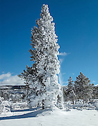 Winter in Yellowstone National Park