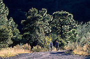 Hikers enjoy the cool pines in Garden Canyon with their dog, Huachuca Mountains, Arizona.©1988 Edward McCain. All rights reserved. McCain Photography, McCain Creative, Inc.