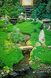 Rill running through Oriental style garden. Landscaped planting of Soleirolia soleirolii (Mind your own business). Design: John Tordoff