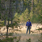 Denver Holt, biologist for the Owl Research Institute in Charlo, Montana, looking for the northern pygmy owl (Glaucidium gnoma) in a forest of northern Montana.
